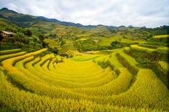 De Terrassen van de rijst Royalty-vrije Stock Fotografie