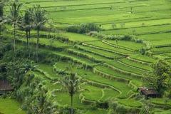 De terrassen van de rijst Royalty-vrije Stock Foto's