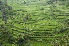 De terrassen van de rijst Royalty-vrije Stock Afbeelding