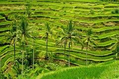 De terrassen van de rijst Royalty-vrije Stock Afbeeldingen