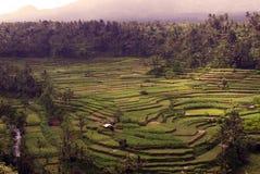 De terrassen van de rijst in Bali Royalty-vrije Stock Foto