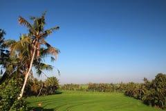 De terrassen van de rijst in Bali Stock Foto