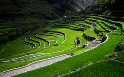 De terrassen van de rijst die door zonnestralen worden aangestoken stock afbeelding