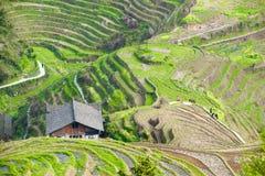 De terrassen van de rijst in Longsheng, China Stock Afbeeldingen