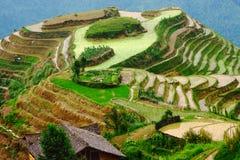 De terrassen van de rijst op draakrand, die licht gelijk maakt Stock Afbeeldingen