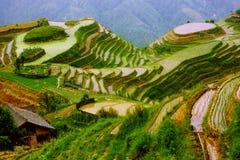 De terrassen van de rijst in steun van Yunnan, China Stock Fotografie