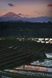 De Terrassen van de Rijst van Bali - van Jati Luwih Stock Afbeeldingen