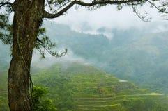 De Terrassen van de Rijst van Banaue Stock Foto's