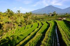 De terrassen van de rijst van Jatiluwih, Bali Royalty-vrije Stock Foto