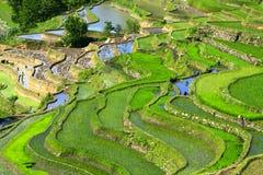 De Terrassen van de rijst in Yuan -yuan-yang Royalty-vrije Stock Afbeeldingen