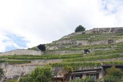 De Terrassen van de wijngaard in heilige-Saphorin, Zwitserland Royalty-vrije Stock Foto's