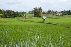 De Terrassen van landbouwersplanting tegallalang rice in Bali Stock Afbeelding