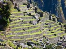 De terrassen van Picchu van Machu Stock Foto's