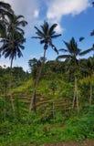 De terrassen van de Tegalalangrijst stock afbeelding