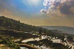 De terrassen van de Yuanyangrijst in de avond stock afbeelding