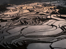 De terrassen Yuanyang, China van de rijst royalty-vrije stock foto's