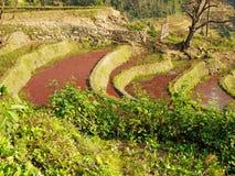 De terrassen Yuanyang, China van de Rijst van Hani Stock Afbeeldingen