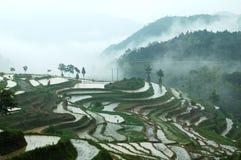 De terrasvormige gebieden van Mingao stock foto's
