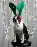 De Terriër van Kerstmis Royalty-vrije Stock Afbeeldingen