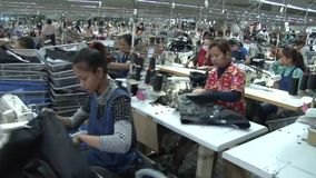 De textielarbeiders van de Kledingstukfabriek: Dolly typebeweging langs doorgangen van arbeiders stock video