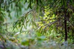 de texturen van de boomboomstam in natuurlijk milieu royalty-vrije stock afbeeldingen