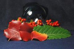 De Texturen van de herfst stock foto