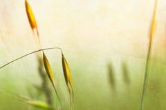 De Texturen van de Installatie van de lente stock foto