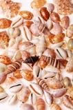 De texturen van de zeeschelp Stock Fotografie