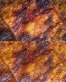 De texturen van het de herfstblad Royalty-vrije Stock Afbeelding