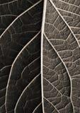 De textuur dichte omhooggaand van het blad Stock Fotografie