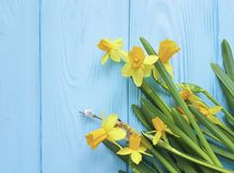 De textuur elegante wilg van de gele narcissen mooie uitnodiging op een blauwe houten romantische huwelijksachtergrond royalty-vrije stock fotografie