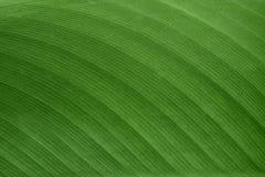 De textuur en het patroon van groen blad voor de achtergrond Royalty-vrije Stock Afbeelding