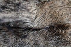 De textuur natuurlijk grijs van het wolfsbont Royalty-vrije Stock Afbeeldingen