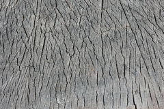 De textuur sneed honderdjarige boom. Stock Foto