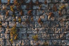 De textuur van de Anticmuur met mos en installatiesklimop, het concept van de de bergenstraat van Itali? stock afbeelding
