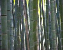 De textuur van bamboe stamt en vertakt zich close-up Het bosje van het bamboe Stock Foto