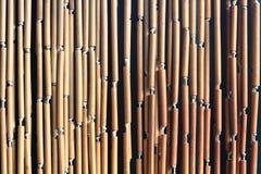 de textuur van de bamboeinstallatie Royalty-vrije Stock Afbeeldingen