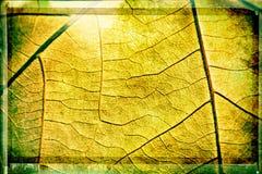 De textuur van bladaders Stock Fotografie