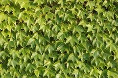 De textuur van bladeren Royalty-vrije Stock Foto
