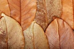 De textuur van bladeren Stock Fotografie