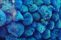 De textuur van blauw mos Stock Foto