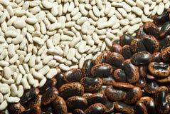 De textuur van bonen Stock Foto