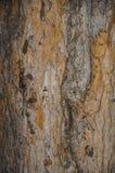 De textuur van de boomboomstam De achtergrond is geel en grijs royalty-vrije stock afbeelding