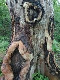 De textuur van de boomschors, geweven behang als achtergrond stock afbeelding