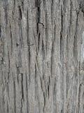 De textuur van de boomschors in het bos, geweven behang als achtergrond stock foto