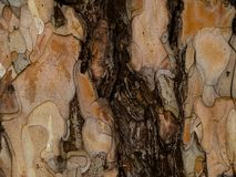 De textuur van de boomschors met donkere barst stock fotografie
