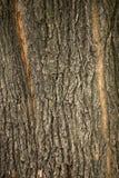 De textuur van de boomschors met twee longitudinale strepen royalty-vrije stock fotografie