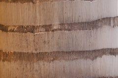 De textuur van de boomschors van palm stock afbeeldingen