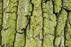 De textuur van de boomschors Schors van de oude boomstam van boom grote diepe barsten royalty-vrije stock afbeeldingen
