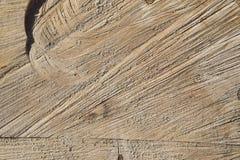 De textuur van de boomstam van de besnoeiingsboom stock afbeelding